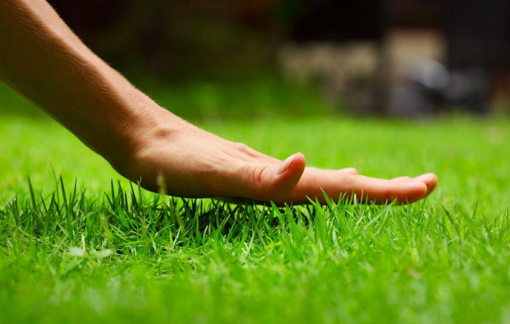 Hand holding grass