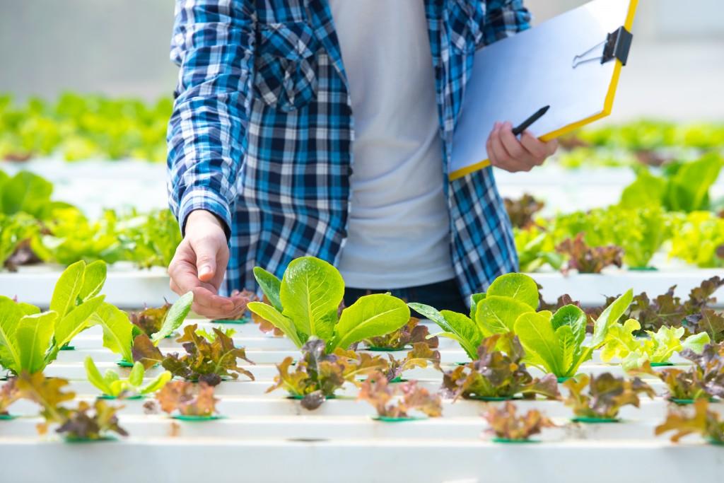 vegetable garden healthy
