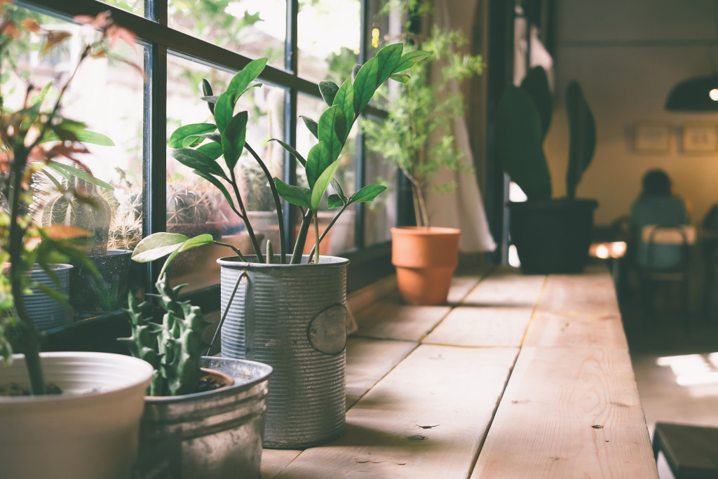 indoor plants by the window