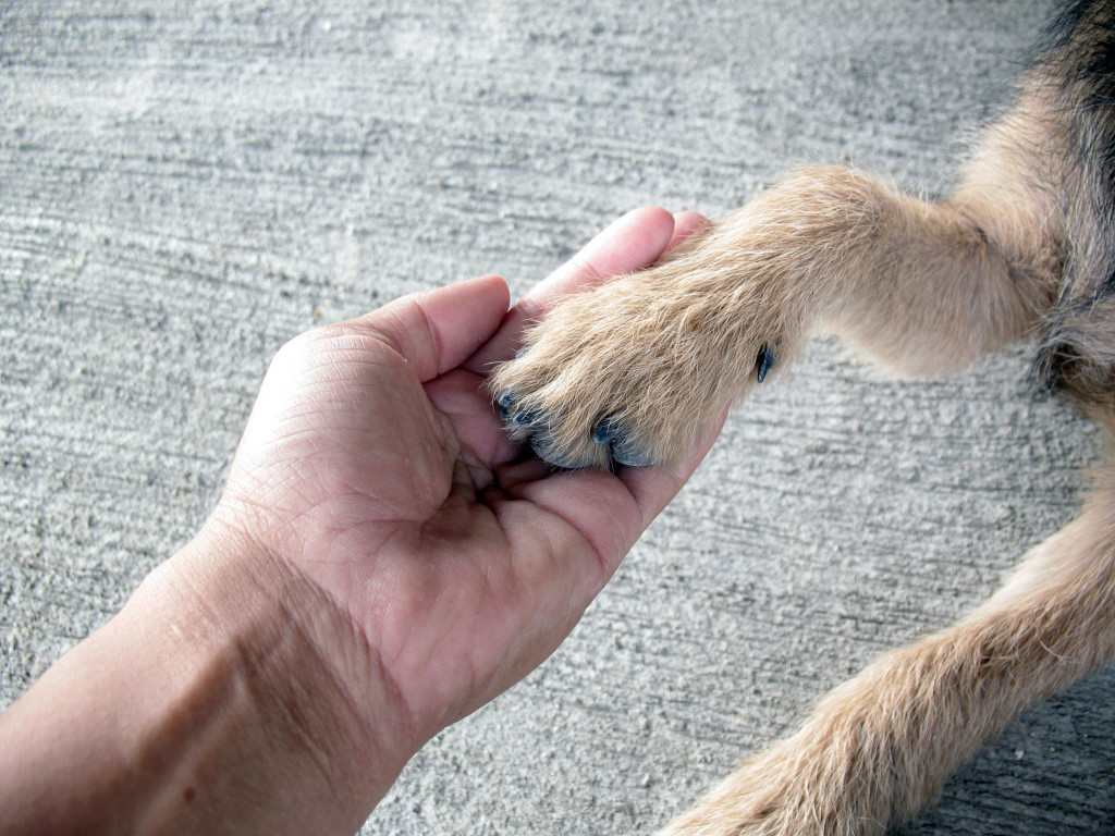 holding dying pet's hands